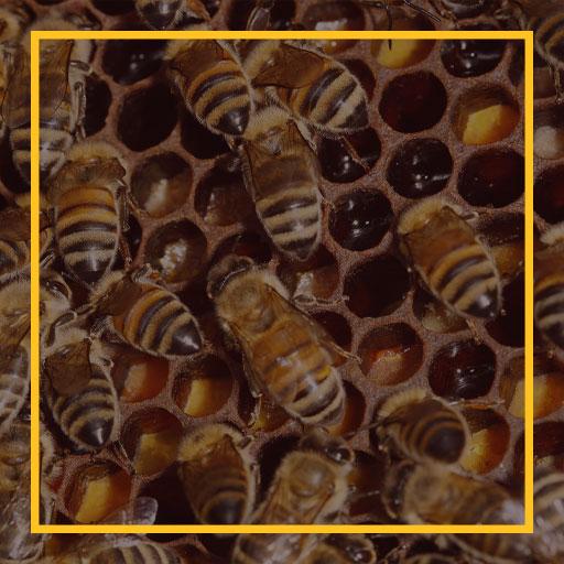 عسل طبیعی تخشید